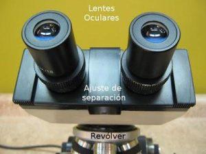 cuales son las partes del microscopio